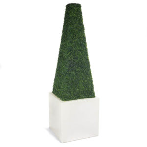 obelisk_Boxwood