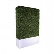 Prosecco Illuminated Boxwood Side1