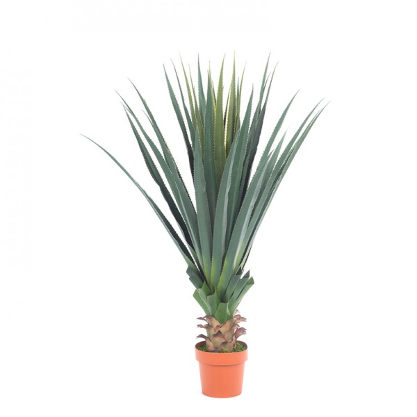 agave plant 125 cm